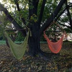 hammock swings